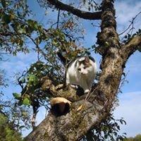 Au Chat Perché - Pension Féline Boarding Cattery www.auchatperche.com
