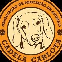 Cadela Carlota & Companhia - Associação de Protecção de Animais