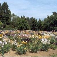 Newport Naturals Iris