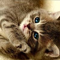 Harper's Happy Critters Cat Sanctuary/Rescue