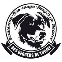 Elevage Beaucerons Des Bergers De Torely