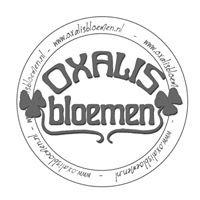 Oxalis Bloemen