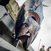 Wedgeport Tuna Tournament & Festival