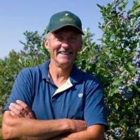 Blueberry Acres U-Pick