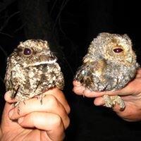 Plumas Audubon Society
