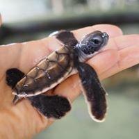 Kosgoda Sea Turtle Conservation & Research Center