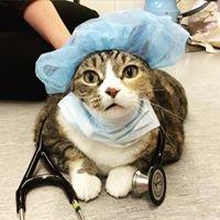 Winnipeg Animal Emergency Hospital