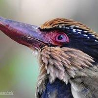 Tangkoko Wildlife Eco-Tour