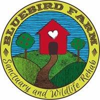 Bluebird Farm- (Cara Petricca/ Animal Sanctuary)
