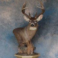 Deer Creek Taxidermy