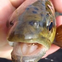 Clinch River Chapter of Trout Unlimited