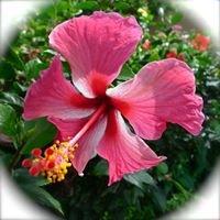 Maui Wailea Ekahi 40-D Vacation Rental