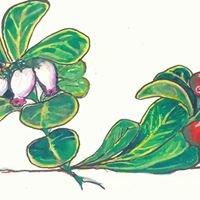 Kinnikinnick Native Plant Society