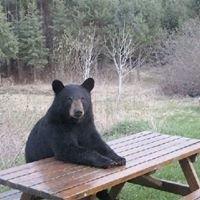 Hungry Bear Farm