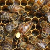 Pine River Beekeeping Club