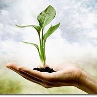 Fitoterapia y Alimentación Ecológica
