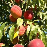 Lemmons Peach Farm