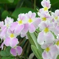 Al-kimia Esencias Florales