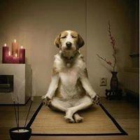 Zen Recovery Solutions