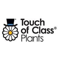 Touch Of Class Plants