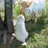 MJ Ironwater Acres - Kiko Meat Goats