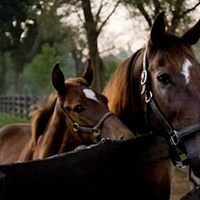 Thoroughbred Heritage Horse Farm Tours