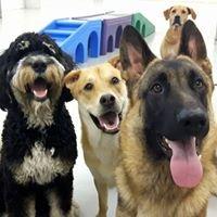 Doggin-It Daycare & Grooming