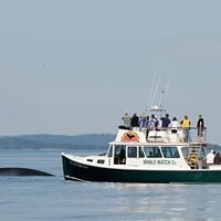 Island Quest Whale and Wildlife Cruises