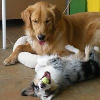 Blue Dog - Dog Training and Doggie Daycare Issaquah, WA 98027