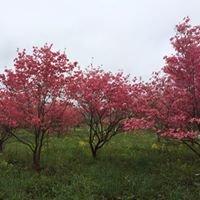 Walker's Tree Farm