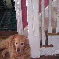 Lorraine's Pet & House Sitting Services