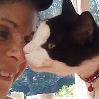 Purr-fect Kitty, Bromley Pet Sitter