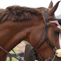 Horse Shows in the Tri-State Area