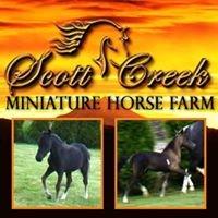 Scott Creek Miniature Horse Farm