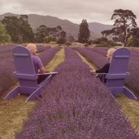 Lavender Abbey Limited