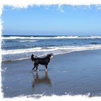 Westport Beach Escapes