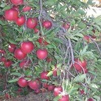 Brumbaugh Fruit Farm