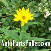 AutoPartsPuller