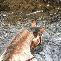 N W Lake Riding Stables