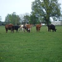 Harley's Family Farm
