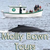 Molly Bawn Whale and Puffin Tours