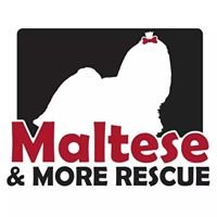 Maltese & More Rescue