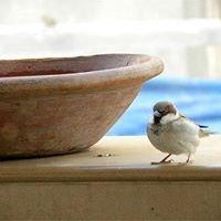 Sparrow's Nest Creations