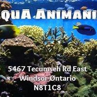 Aqua Animania