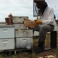 Gentle Hive Bee Foundation