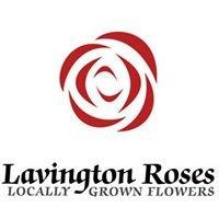 Lavington Roses