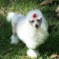 Hilltop Pet Grooming