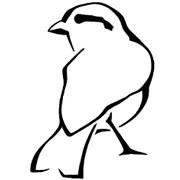 The Blind Sparrow