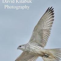 David Kilabuk Photography