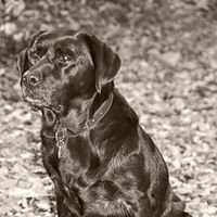 4 paws photography